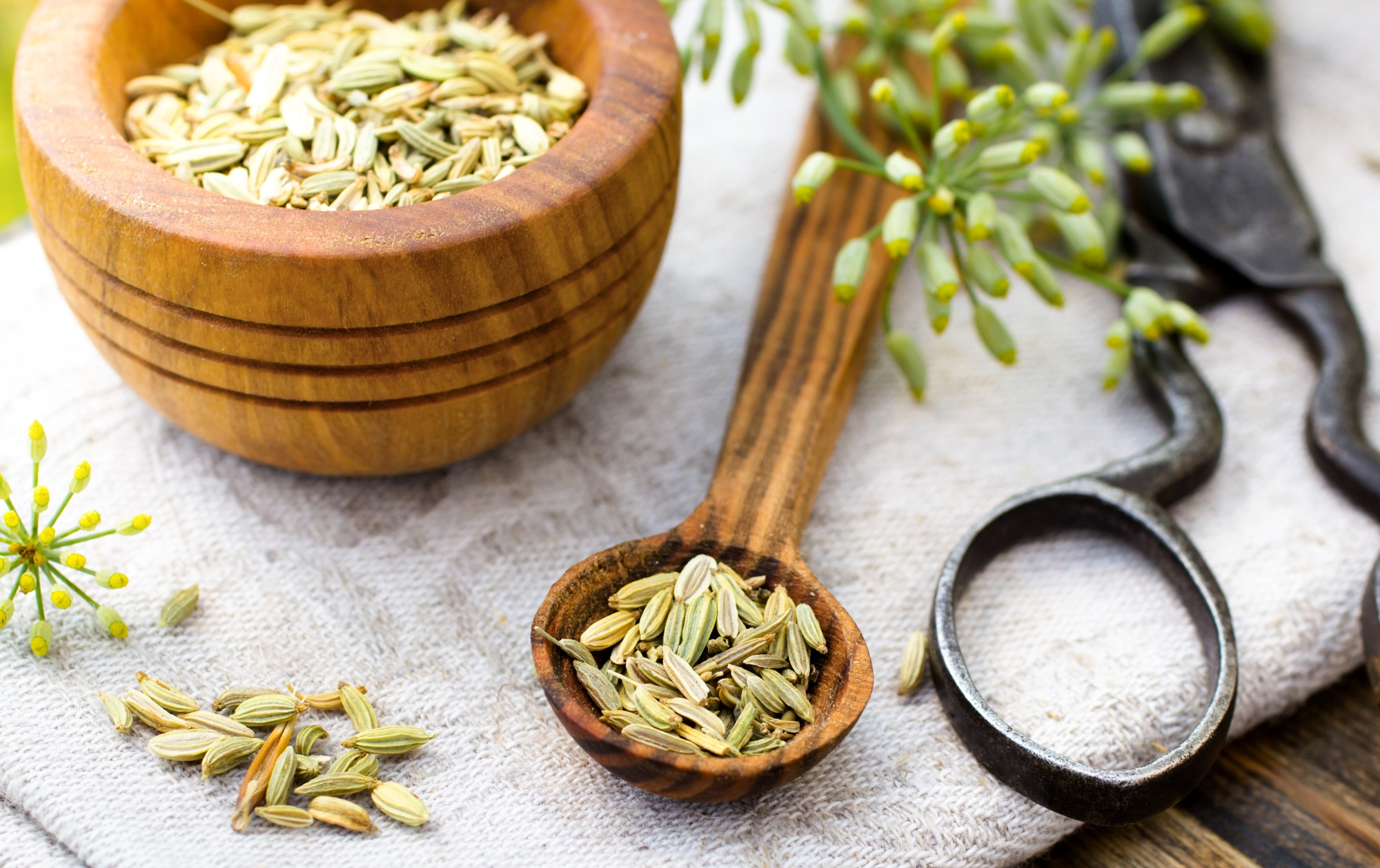 Why You Need Fennel Seed Part Of Your Diet